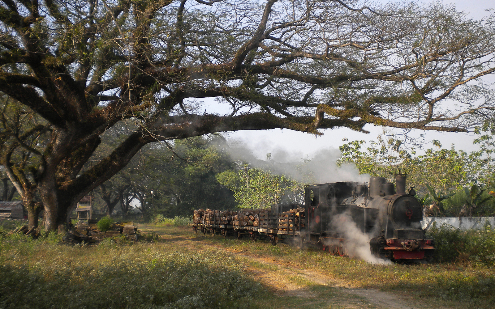 Foto: Jahrzehntealte Dampfloks aus Deutschland und Holland nicht nur in den Zuckerrohrplantagen, sondern auch in den verbliebenen Teakholzwäldern. Auf Java in Indonesien. Fotografiert von railmen-Lokführer Steffen Mann.